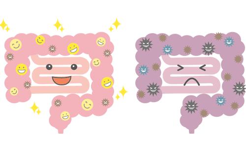 腸内環境のイラスト
