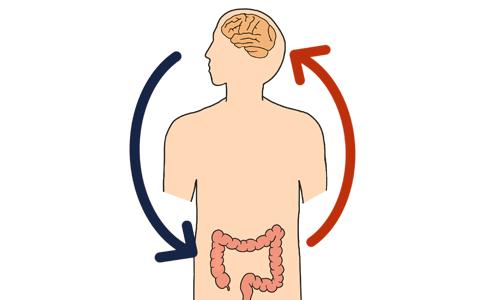 腸と脳の関係を表すイラスト
